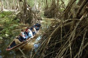 boat in mangroves