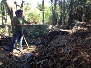 Rosita from the Mangrove Association watering the compost pile.