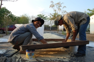 Farmers affiliated with the Mangrove Association dry the first crop of native corn seed produced under government-certified quality standards.  Photo: Tricia Johnson