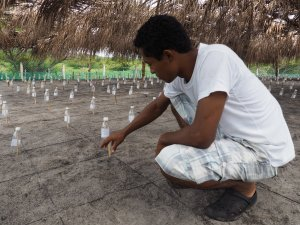 Oscar Giovanny Díaz, who coordinates the turtle conservation project on Playa Los Negros, shows us how the hatchery works.