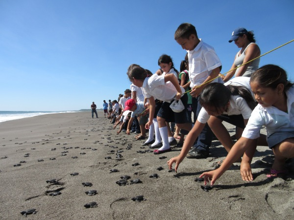 Students release hatchlings